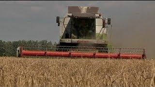 Download Biocarburants : une menace pour la marché alimentaire mondial ? Video