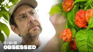Download How This Guy Made the World's Hottest Peppers | Obsessed | WIRED Video