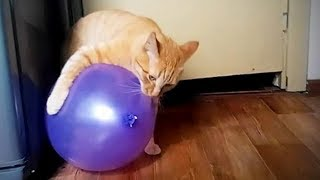 Download Awesome Cats 😸🎈Funny Cute Cats vs Balloons (Full) [Funny Pets] Video