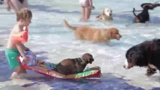 Download Hundebadetag der Stadtwerke Bayreuth im Kreuzsteinbad Video