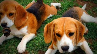 Download Cute Animals 🐶🐱 Funniest Cats And Dogs Moments (Part 1) [Funny Pets] Video