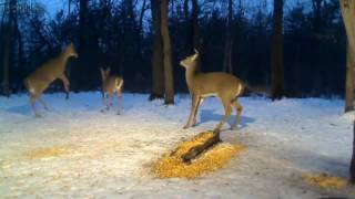 Download Early Evening At Deer Trail Video