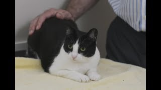 Download How to tell if your cat is sick Video