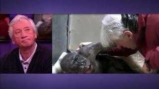 Download Mooie beelden: chimpansee stelt Jan van Hooff gerust - RTL LATE NIGHT Video