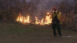 Download Tennessee brush fire concerns grow, arson to blame for 41 of 53 in the past two weeks Video