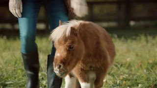 Download Amazon TV Ad - A Lonely Little Horse Video