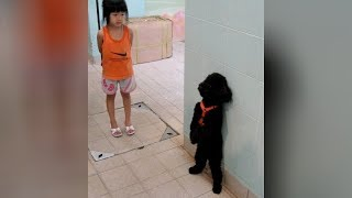 Download Have you ever seen DOG VIDEOS SO FUNNY? - Prepare to DIE FROM LAUGHING Video