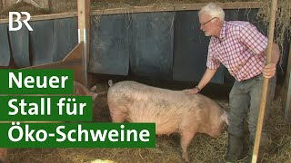 Download Familie Mays neuer Stall für ihre Öko-Schweine   Unser Land   BR Fernsehen Video