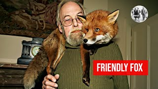 Download Friendly fox becomes a household pet Video
