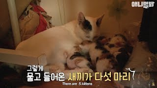 Download A Stray Cat Who Came Back With Her Kittens After A Year Video