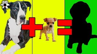 Download Top 20 Unbelievable Cute Cross Breed Dogs You'd Want To Own Video