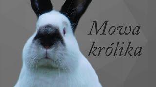 Download Jak rozumieć królika? - królicza mowa / PORADNIK Video