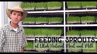 Download Feeding Sprouts Video