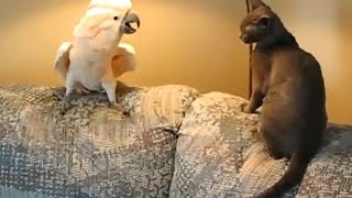 Download 17 FUNNY PET VIDEOS 🐶🐐😻 TRY NOT TO LAUGH [Funny Pets] Video