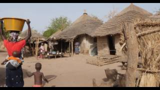 Download El empoderamiento de las comunidades forestales en Gambia Video