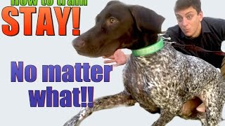 Download How to Teach your Dog to STAY- NO MATTER WHAT! Video