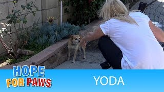 Download Neighbors told us that his owner died and he became homeless. Video