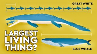 Download What's The Largest Thing To Ever Live On Earth? DEBUNKED Video