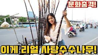 Download 우리가 몰랐던 베트남에서 사탕수수 먹는 방법! Video