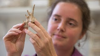 Download How did the first humans migrate into Australia? Video