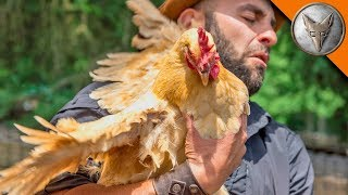 Download WING'ED by a CHICKEN! Video