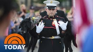 Download Watch A Marine Give His Beloved Dying Dog A Touching Final Ride | TODAY Video