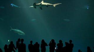 Download Amazing Monterey Bay Aquarium in California Video
