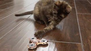 Download KITTEN PLAYS WITH FIDGET SPINNER Video