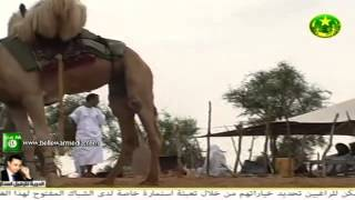 Download مناظر طبيعية من موريتانيا على انغام ولد اميليد | التلفزة الموريتانية Video
