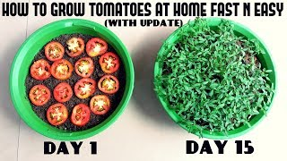 Download Grow Tomatoes from Tomatoes (Easiest Method Ever With Updates) Video