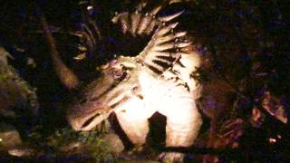 Download [Animal Kingdom] DINOSAUR Ride POV Night-Vision Disney's Animal Kingdom Florida Video
