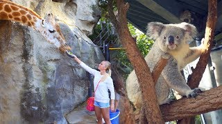 Download CAMPING OVERNIGHT IN THE SYDNEY ZOO Video