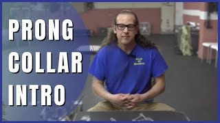 Download Intro to prong collars How to Dog Training Solid K9 Training Video