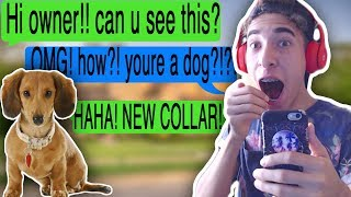 Download TEXTING MY DOG USING A CHAT COLLAR™ (Tap | Where did you go) Video