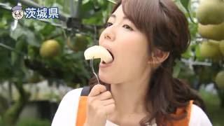 Download 磯山さやかの旬刊!いばらき『茨城の梨』(平成28年8月19日放送) Video