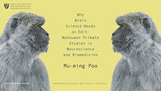 Download Why Brain Science Needs an Edit | Mu-ming Poo || Radcliffe Institute Video
