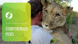 Download Humans Amazing Friendship With Lion Video