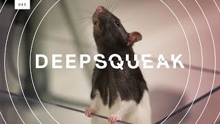 Download This algorithm decodes rat squeaks and could revolutionize animal research Video