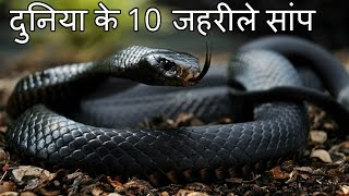 Download दुनिया के 10 सबसे जहरीले सांप Top 10 Most Venomous Snakes in the World Video
