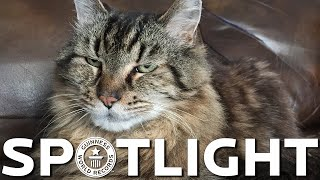 Download Corduroy is crowned the oldest living cat - Spotlight Video