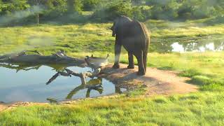 Download Djuma: Lone Elephant bull - 06:43 - 02/20/19 Video