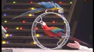 Download Trained parrots Video