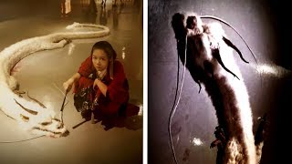 Download 5 Dragons Caught On Camera & Spotted In Real Life! #2 Video