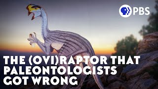 Download The Case of the Dinosaur Egg Thief Video
