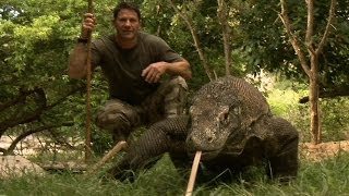 Download Largest Lizard on Earth | The Komodo Dragon | Deadly 60 | Indonesia | Series 3 | BBC Video