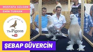 Download Türkiye Güvercin Forum Video