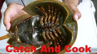 Download Catch And Cook: 450 Million Year Old Living Fossil - Horseshoe Crab Video