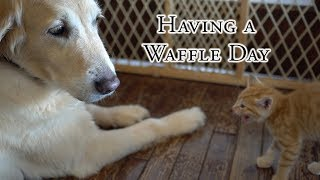 Download Having a Waffle Day Video