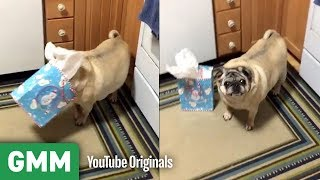 Download Dogs Opening Gifts | Teach Your Old Dog A New Trick Video