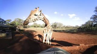 Download 360 VR Video of Giraffe Manor, The Safari Collection - Kenya Video